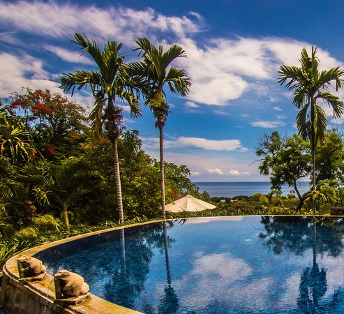 Seririt, Indonesien: The infinity pool with a view on the rice fields and the sea