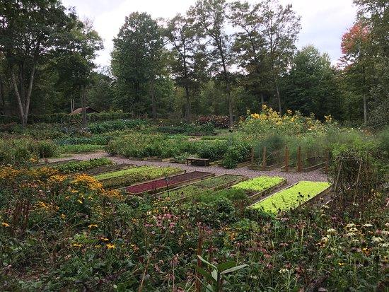 Canoe Bay: Awesome organic garden