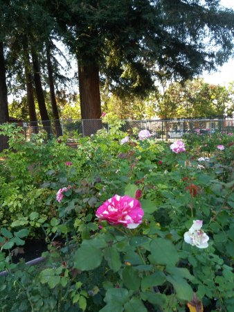 Municipal Rose Garden San Jose Ca Top Tips Before You Go With Photos Tripadvisor