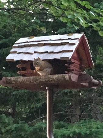 Lutsen Resort on Lake Superior: On deck bird (squirrel) feeders