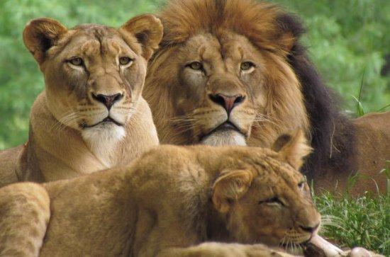 3 Days Masai Mara Camping Safari All...