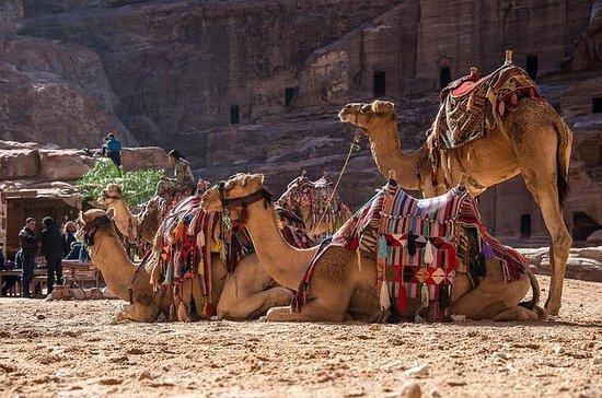 Tour Privado de Amman: Petra with...