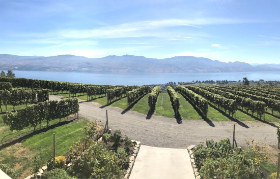 Mission Hill Family Estate Winery: photo1.jpg