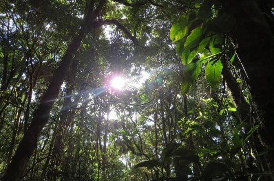 Monteverde Cloud Forest Hike plus...