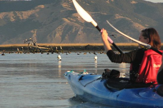 Kayak tour into the Wairau Lagoon