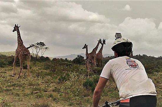 1 day Walking and Bike Safari in...