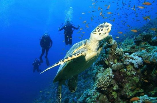 2 Tank Barrier Reef Dive from...