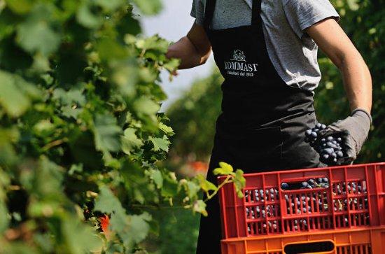 Amarone Weinprobe in Verona bei...