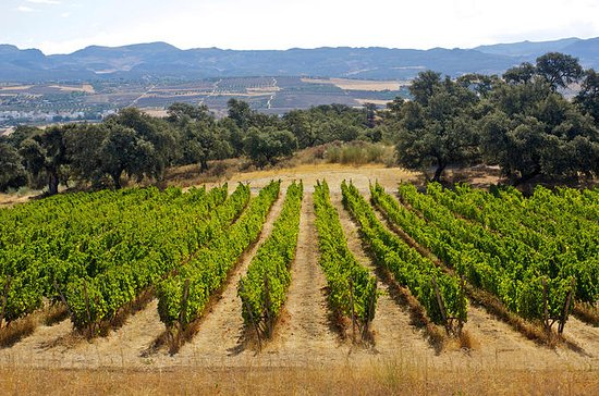 Private Wine Tasting and Tapas in Winery Including a Visit to Ronda ...