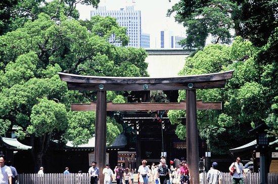 Tour Privado de Tokio con Excursión plus