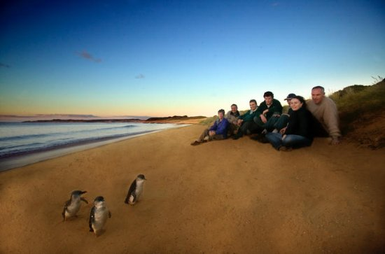 Private Phillip Island Day Trip from...