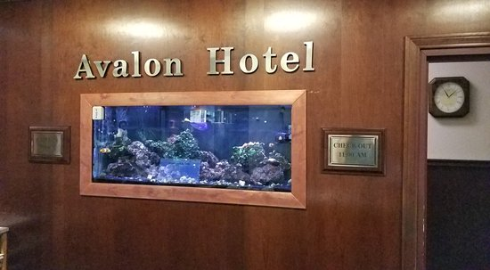 The Avalon Hotel and Conference Center: The fist tank behind the front desk. Sadly, I doubt it will survive the conversion to a DoubleTr