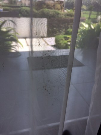 The Samara: Mold/mould on curtains