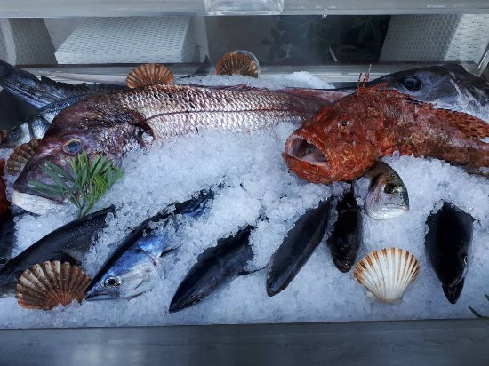 daily fresh fish picture of vitaceae trstenik tripadvisor