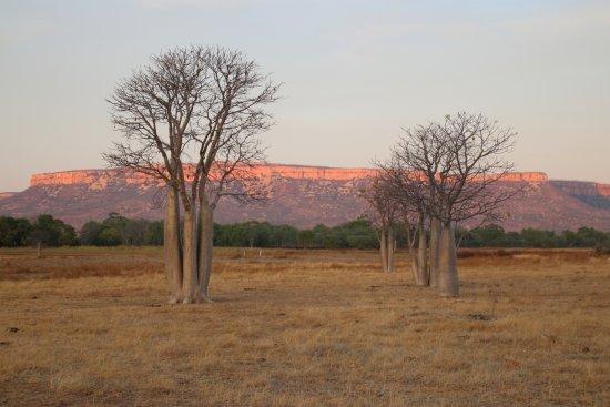 Kununurra Visitor Centre: Cockburn Ranges and beautiful Boabs - just love the East Kimberley!