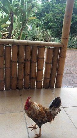Camacuri Apartments Aruba Foto