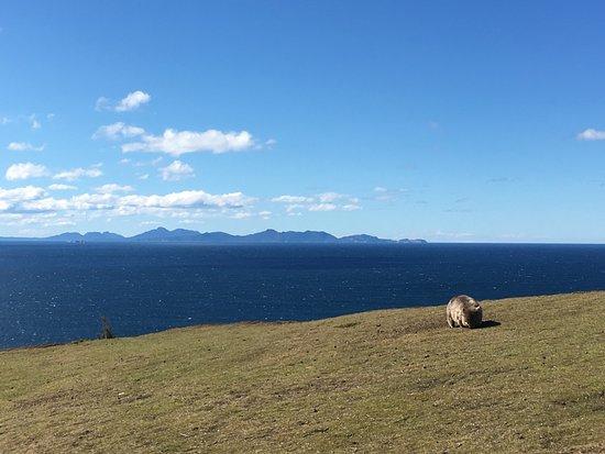 Tasmania, أستراليا: photo1.jpg