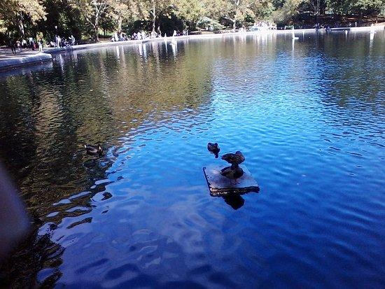 Hilton Times Square: Central Park Ducks