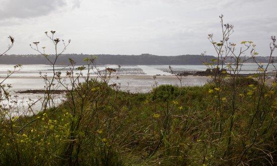 Saint-Jacut-de-la-Mer, Fransa: Die Pfahlgehege der Austern- und Muschelfischer in der Arguenon-Bucht.