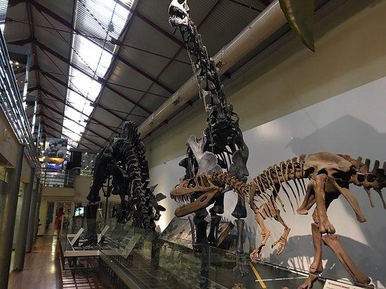 Museo Nacional de Ciencias Naturales: Me ha encantado, el realismo y cuidado al detalle son impresionantes