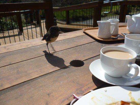 Mt Lyford Lodge: very friendly locals