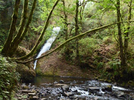 Corbett, OR: View of Underbrush