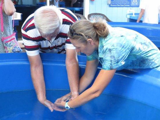 Ocean Rider Seahorse Farm: Holding a seahorse