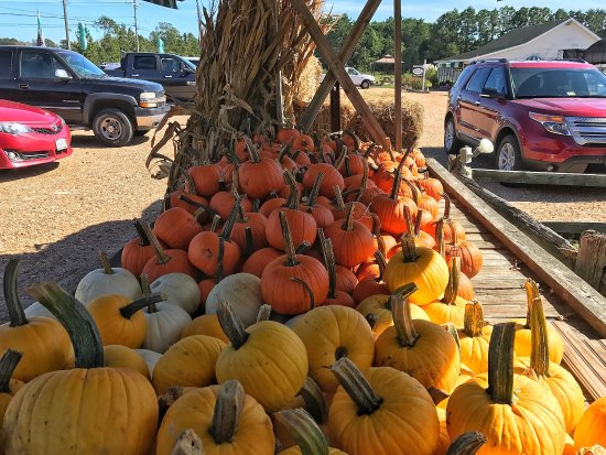 Grandy, Carolina del Norte: Pumpkins