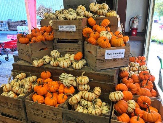 Barco, NC: Pumpkins