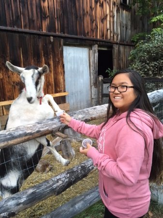 Colby Hill Inn: Our daughter loved feeding the goats!