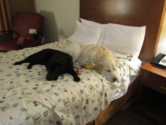 La Quinta Inn & Suites Danbury Picture