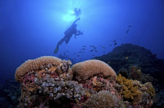 2 Tank Barrier Reef Dive from Hopkins
