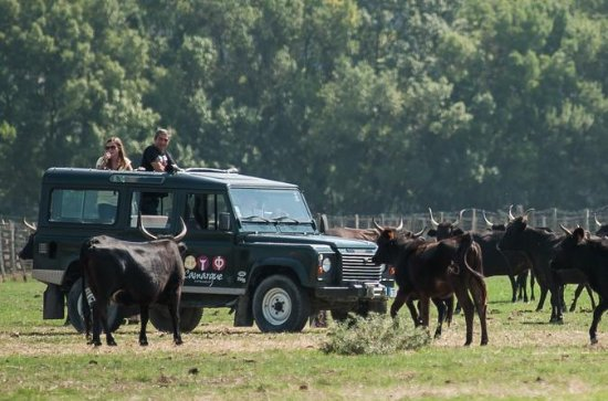4x4 safari in the Camargue from...