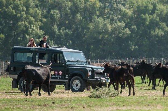 4x4 safari i Camargue fra Aigues...