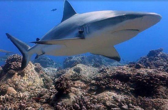 Shark Scuba Diving Safari (apenas...