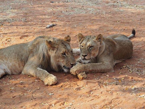 Mukuni Big 5 Safaris: OI000071_large.jpg