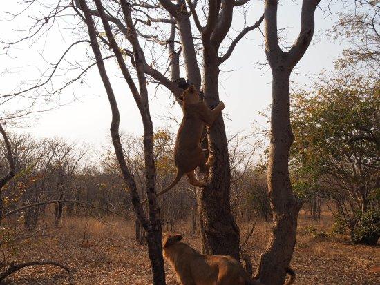 Mukuni Big 5 Safaris: OI000034_large.jpg