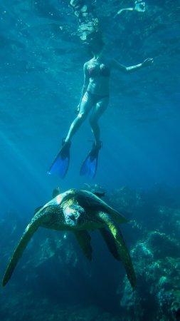 Maui Kayaks: photo0.jpg