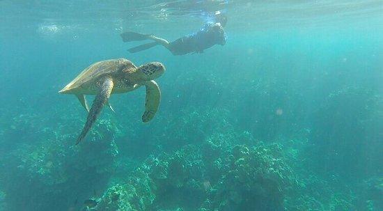 Maui Kayaks: photo3.jpg
