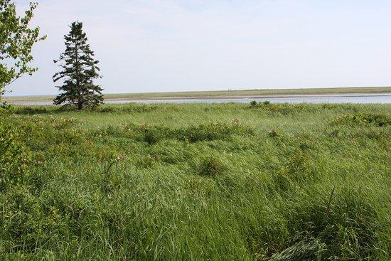 Saint-Louis-de-Kent, Canada: Salt marsh.