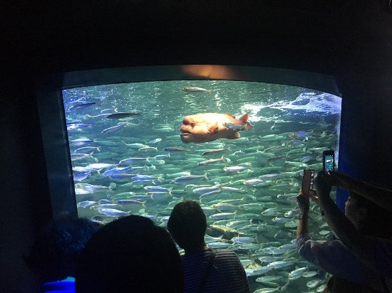 aquarium - Picture of Sunshine Aquarium, Toshima - TripAdvisor