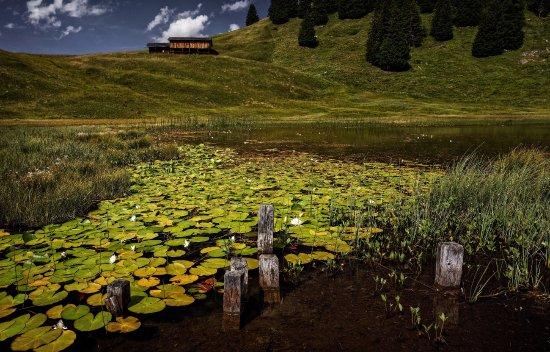 Malans, Svájc: Stels im Prättigau