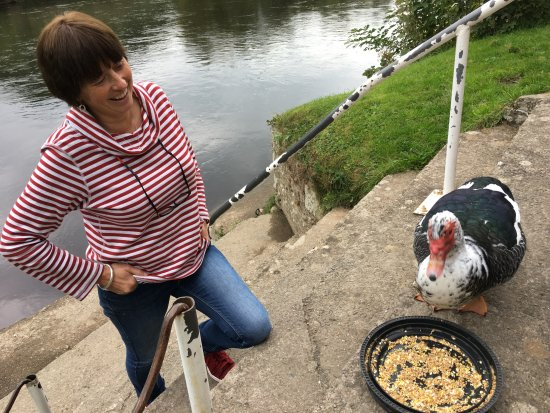 Glasbury-on-Wye, UK: Owner and resident muscovy duck.  Dougal