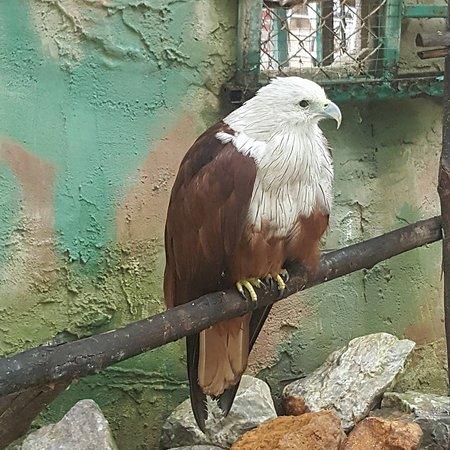 Wildlife Friends of Thailand - Tha Yang - Wildlife Friends ...