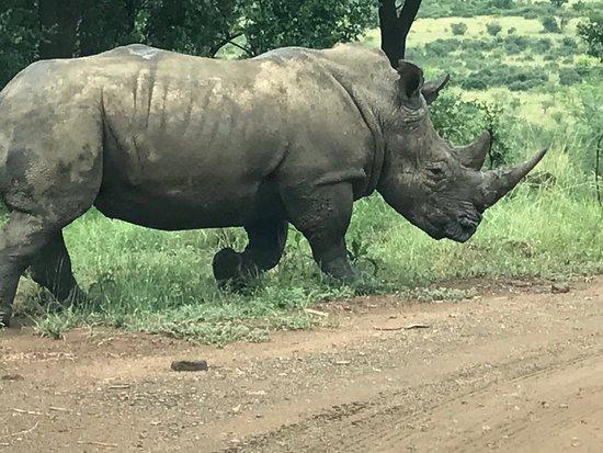 Pilanesberg National Park, Sør-Afrika: photo0.jpg