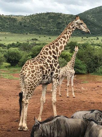 Pilanesberg National Park, Sør-Afrika: photo2.jpg