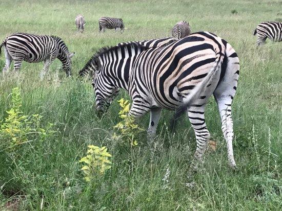 Pilanesberg National Park, Sør-Afrika: photo3.jpg
