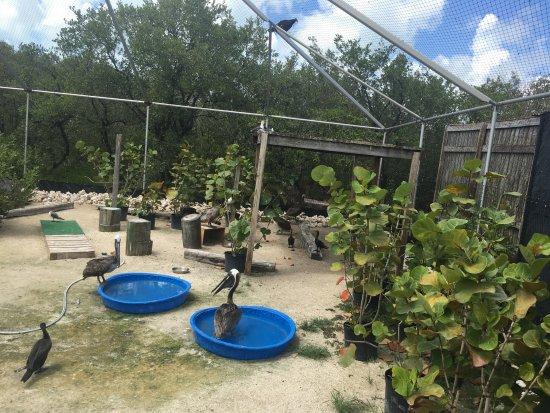 Tavernier, FL: Des pensionnaires du sanctuaire