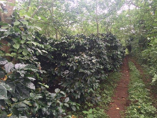 Paksong, Laos: IMG-20170929-WA0023_large.jpg