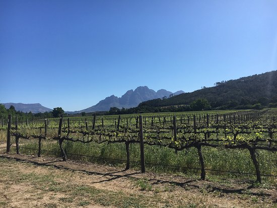 Incredible afternoon at Lynx Wines